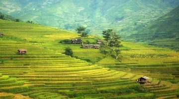 Сельское хозяйство Китая