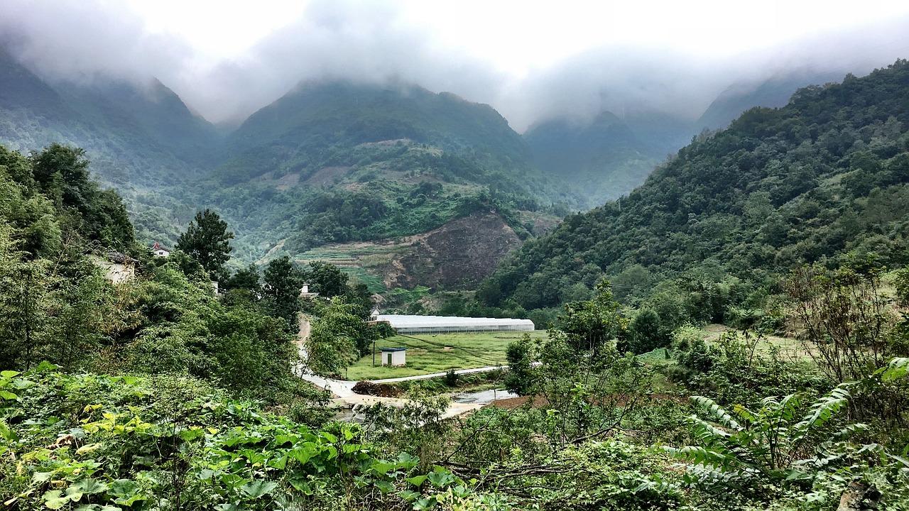 леса в китае
